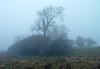 Foggy Langbank - 21 December 2017