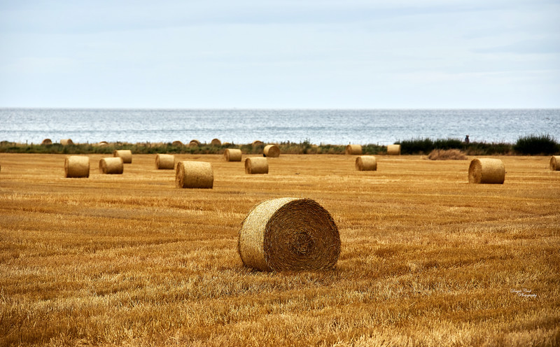 Bales of Hay in Buckie - 10 September 2020