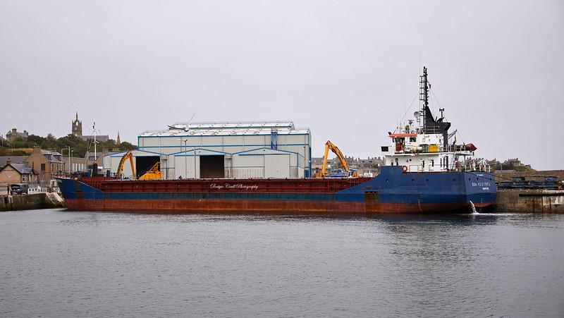 Sea Kestrel in Buckie Harbour - 8 September 2020