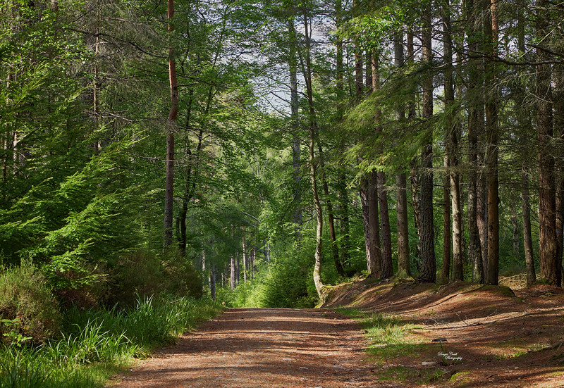 Fochabers Forest - 7 June 2019