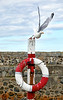 Time to Fly at Portsoy Harbour - 1 September 2020