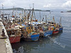 Fishing Fleet at Oban