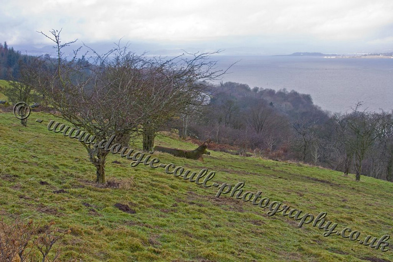 Overlooking the River Clyde from Langbank