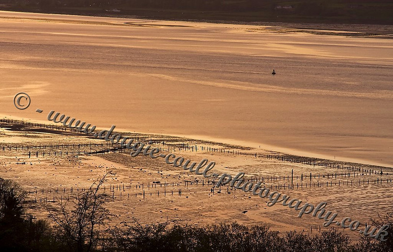Mud Flats from Langbank