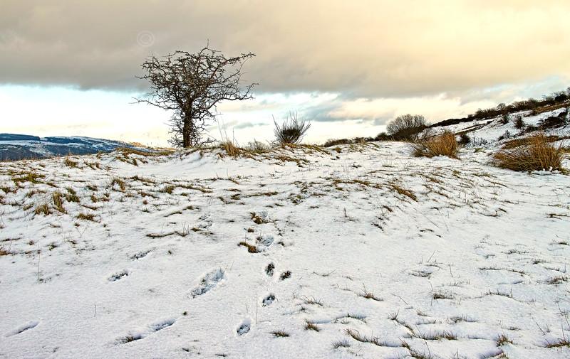 Snowy Langbank - 29 January 2015