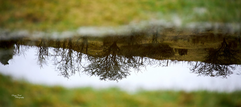 Puddle Water in Langbank - 29 January 2021