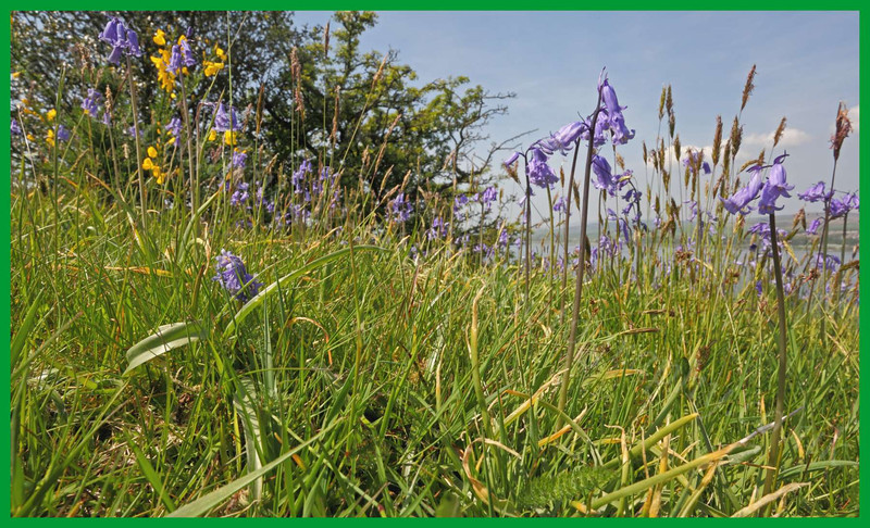 Flowers - Langbank - 24 May 2012
