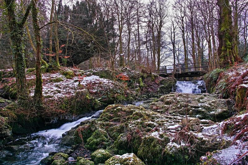 Woods near Langbank - 20 January 2015