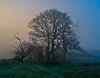 Misty in Langbank - 29 December 2014