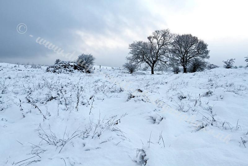 Bleak Snow