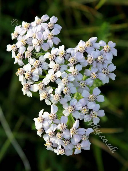 Flowers - Langbank