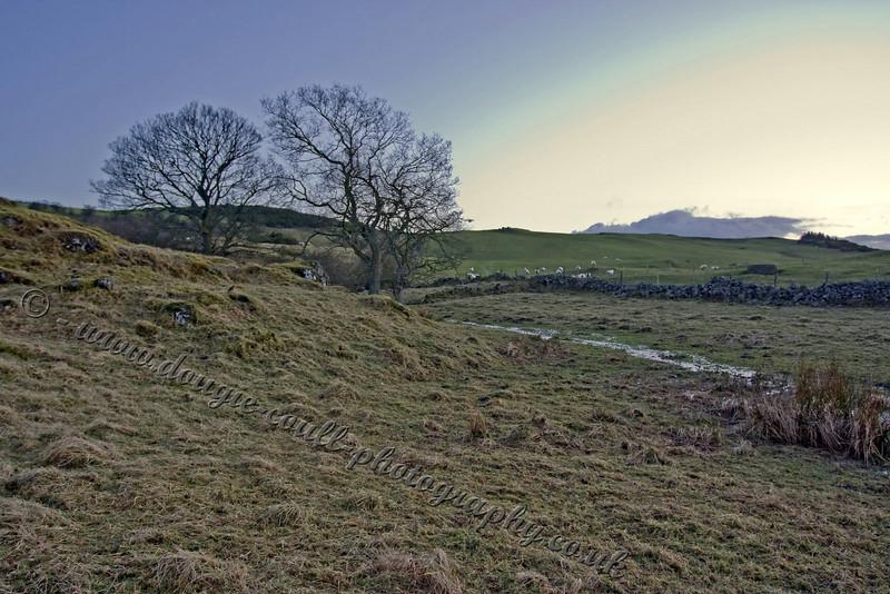 Langbank Field - Early Evening