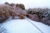 View from House Rear at Winter Sunrise - Langbank