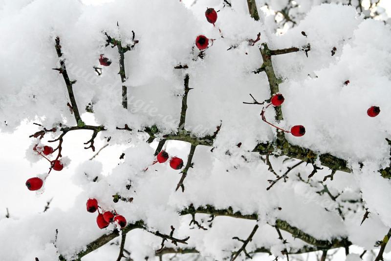 Berries 'n' Snow