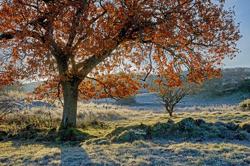 Frosty Morning in Langbank - 18 November 2019