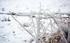 Snow Fence - Langbank - 25 January 2013