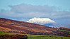 Snow Dusted 'Ben Lomond' from My Window - 4 November 2013