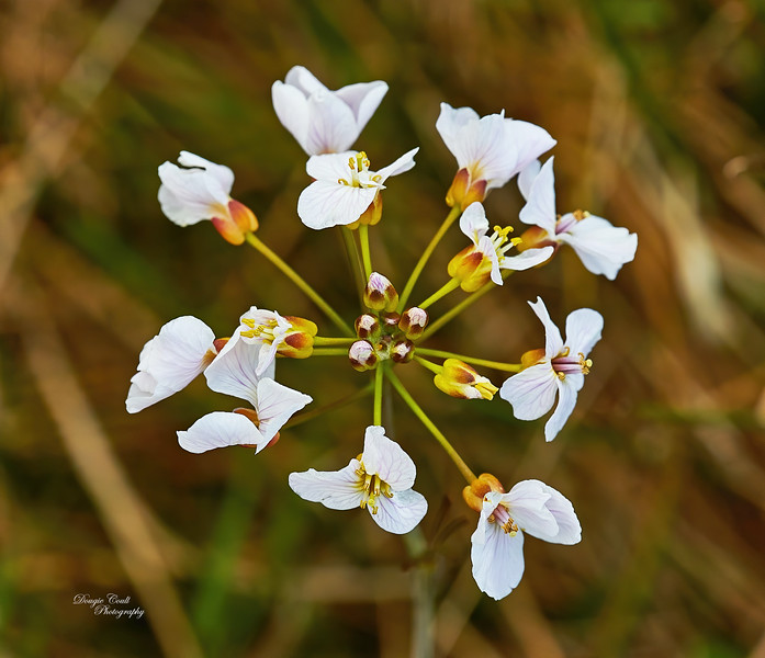 Plant Life inLangbank - 8 May 2020