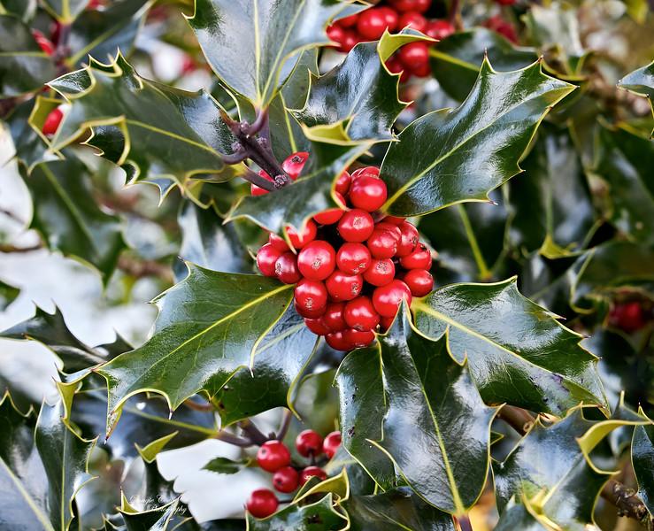 Holly at Langbank - 6 December 2020