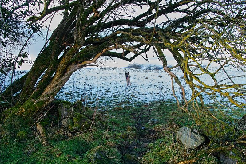 Through the Tree Arch Langbank - 29 January 2015