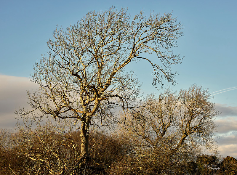 Leaves to follow Later in Langbank - 26 February 2021