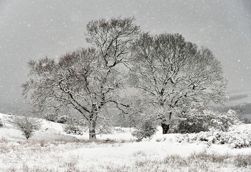 Winter Scene at Langbank - 29 December 2017