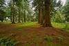 Woods at Mount Stuart near Rothesay - 3 November 2015