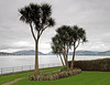 Palm Trees - Rothesay - 13 March 2012