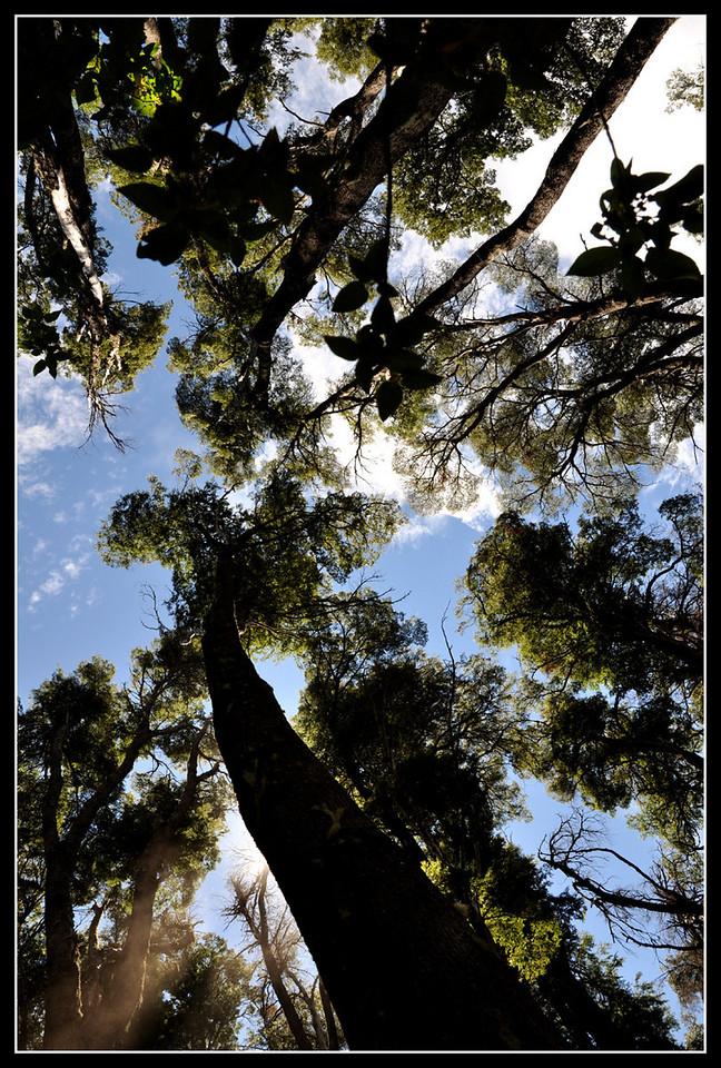 A Peak Through The Trees.