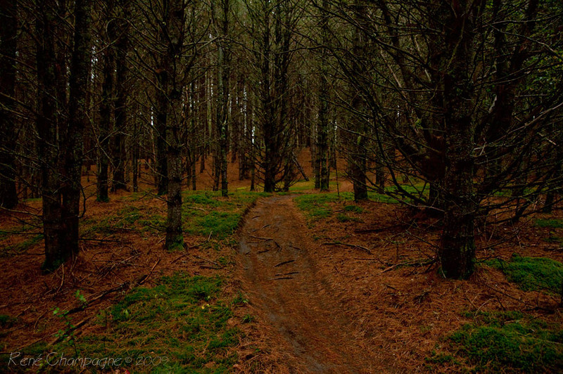 Kingdom Trails, VT. - Old Webs Trail