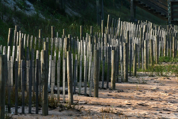 The fences that keep the sand in place and protect the dunes