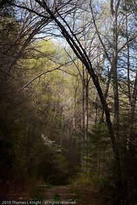Mountain trail to Tom Springs Falls April 2010