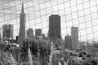 San Francisco Captured from Telegraph Hill