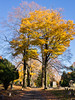 Autumn at Greenwood Cemetery