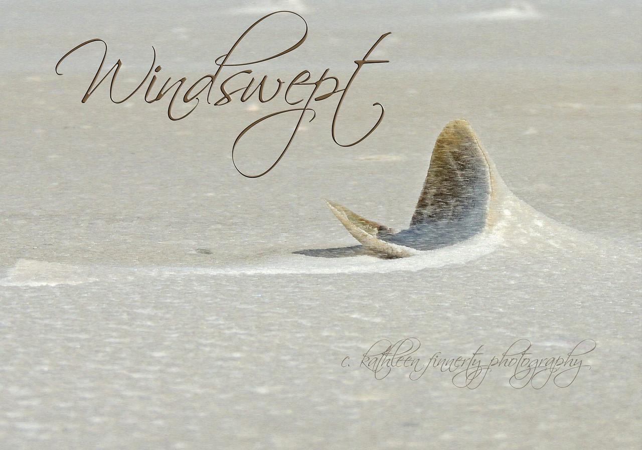 windswept7706-2
