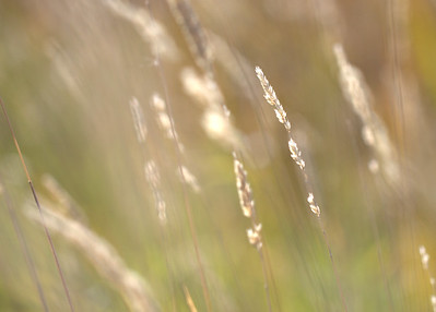 Light on Summer Grasses