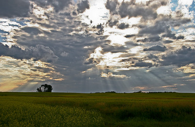 Prairie Light