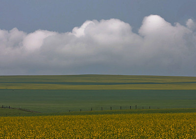 Simple, yet rich. - near Hanna, Alberta.