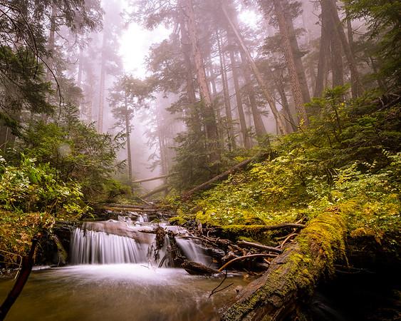 Creekside Fog