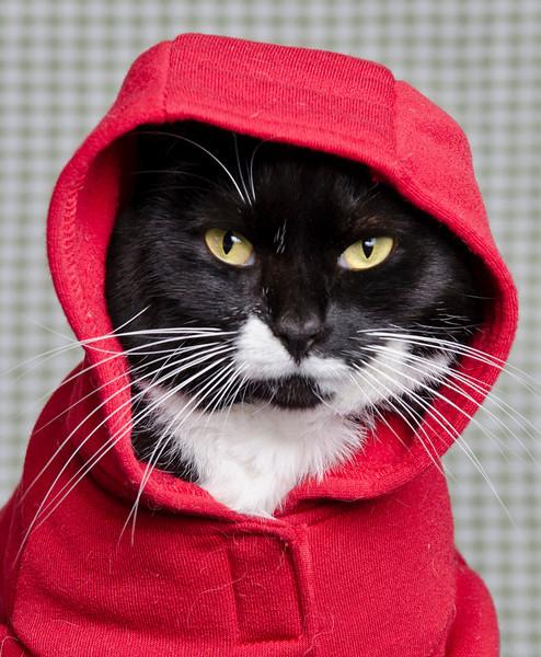 My cat Puss in winter jacket.