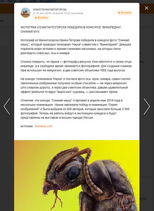 """ФОТОГРАФ ИЗ МАГНИТОГОРСКА ПОБЕДИЛА В КОНКУРСЕ """"ВИКИПЕДИИ"""", СНИМАЯ МУХ"""