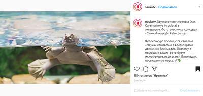 Двухкоготная черепаха (лат. Carettochelys insculpta) в аквариуме.