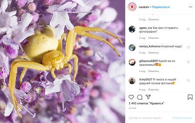 Желтый цветочный паук Misumena vatia на цветах. ⠀