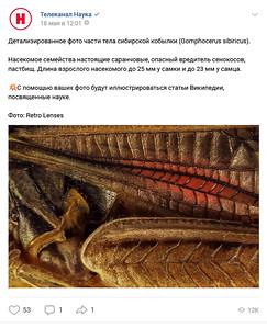Детализированное фото части тела сибирской кобылки.