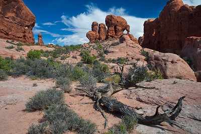 Laying low. Eden's Garden. Arches NP