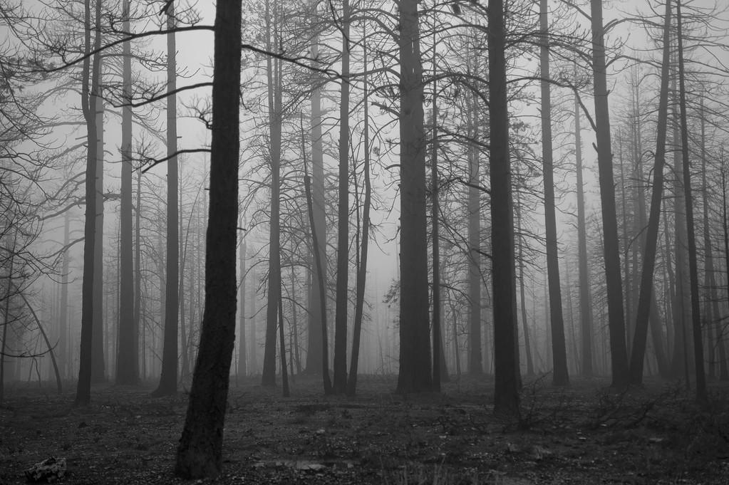Trees. Bryce Canyon NP, Utah