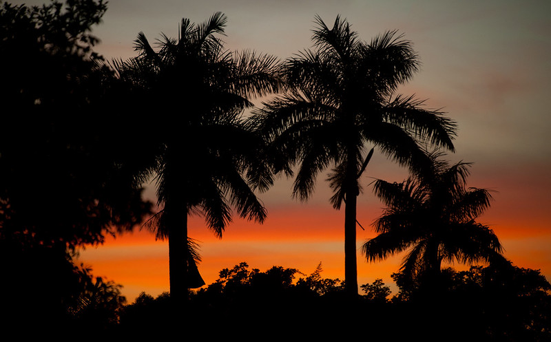 Beauty- Everglades NP