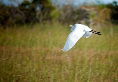 Flight1- Everglades NP