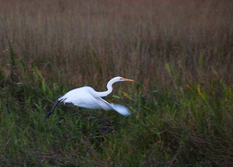 Take Off- Everglades NP