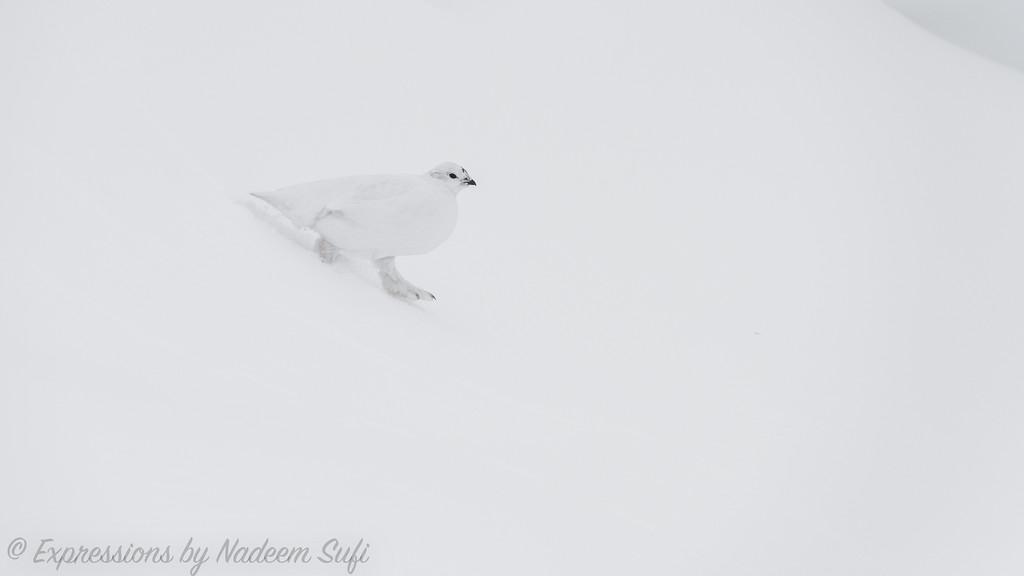 2017_Wapusk National Park_0420